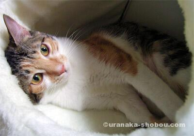 20071125猫の絵金