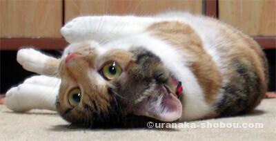 20080515猫の絵金