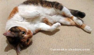 20150615猫の絵金