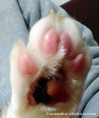 猫の肉球(後ろ足)