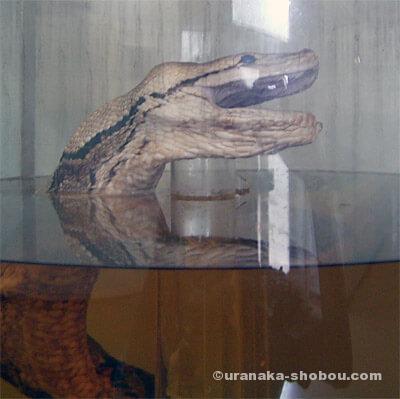 ジャパンスネークセンター(へび研)大蛇のホルマリン漬け