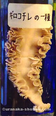 目黒寄生虫館「ギロコチレ」標本