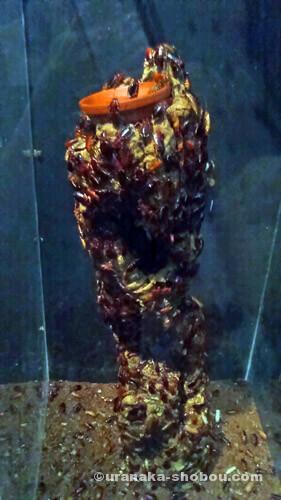 「キモい展」トルキスタンローチタワー