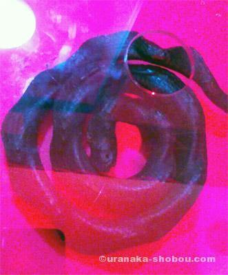「もうどくてん2」エラブウミヘビの燻製