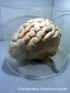 「新宿秘宝館」の脳みそ