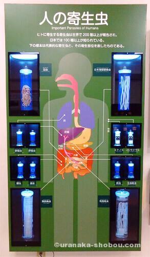 目黒寄生虫館「人の寄生虫」パネル展示