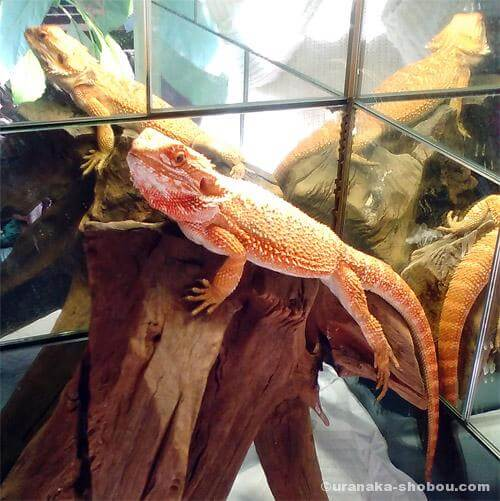 爬虫類カフェ「横浜亜熱帯茶館」に行ってきました!【放し飼いエリアあり】