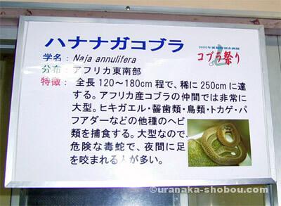 ジャパンスネークセンター(へび研)コブラ祭り