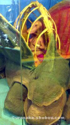 「怪しい少年少女博物館」恐竜っぽいオブジェ