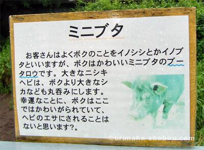 ジャパンスネークセンター(へび研)ミニブタの看板