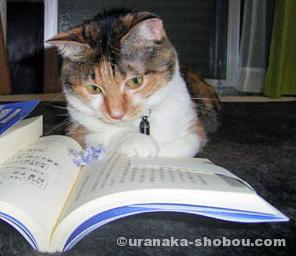 読書する絵金(猫)