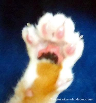 猫の肉球(前足・ブレあり)