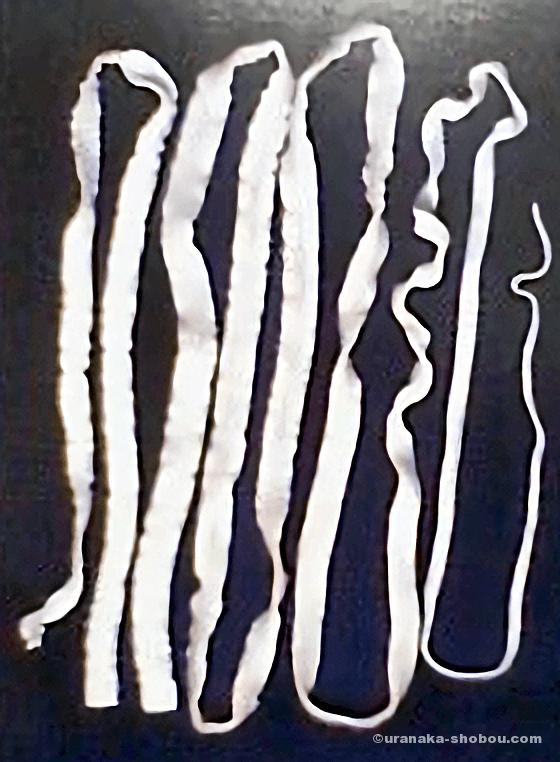 目黒寄生虫館「サナダムシ」のポストカード