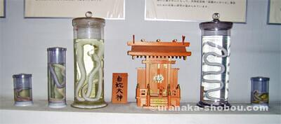 ジャパンスネークセンター(へび研)白蛇大神