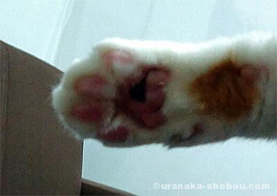 猫の肉球(前足・横)